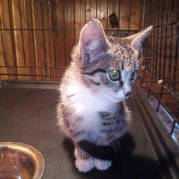Кошки - Котенок в дар, 0