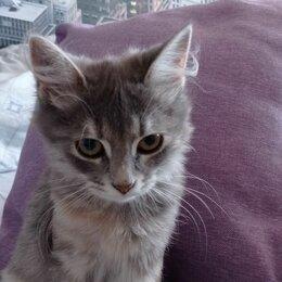 Кошки - Кошечка и котик 4х месячного возраста. Отдаем красивых котят. , 0