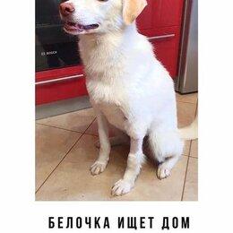 Собаки - Собаке ищет дом и друга, 0