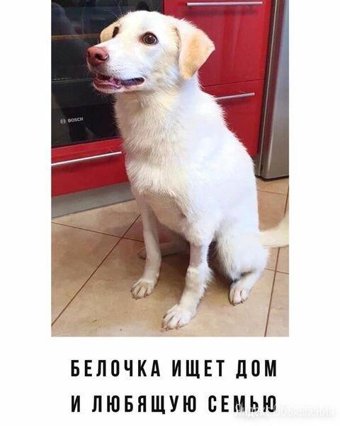 Собаке ищет дом и друга по цене 1₽ - Собаки, фото 0