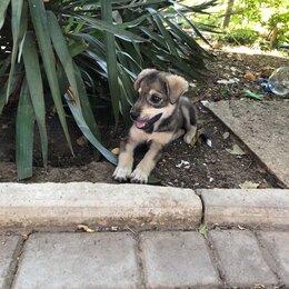 Собаки - Щенки (Семеновка, Крым), 0