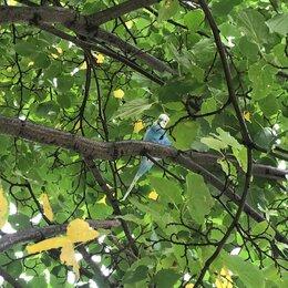 Животные - Найден попугай, 0