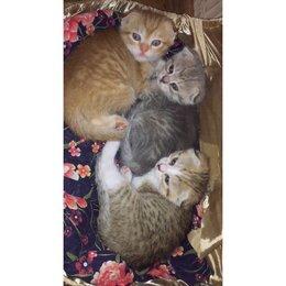 Кошки - Котята), 0