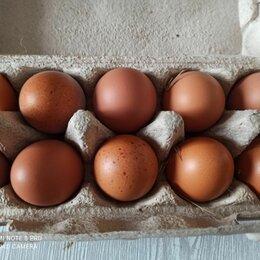 Продукты - Яйцо домашнее, 0