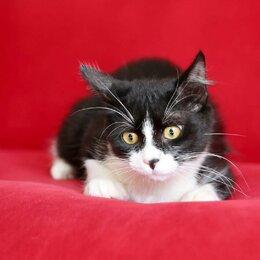 Кошки - Йошкин кот ищет дом, 0