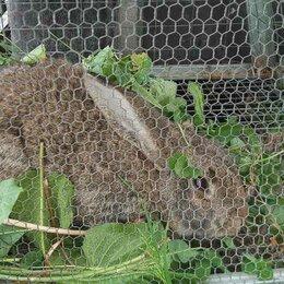Кролики - Кролики - это не только ценный мех, 0