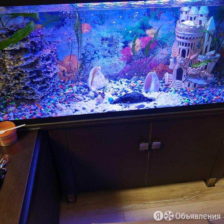 Продам аквариум по цене 7000₽ - Аквариумы, террариумы, тумбы, фото 0