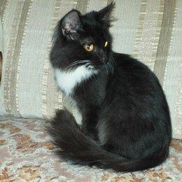 Кошки - Отдам заботливым родителям котика, 0