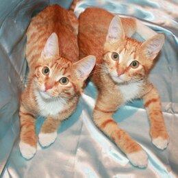 Кошки - Рыжие мальчишки ищут дом!, 0