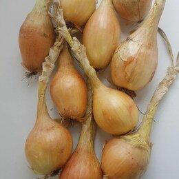 Лук-севок, семенной картофель, чеснок - Лук-севок длин.в ассортименте 1кг. (Россия), 0