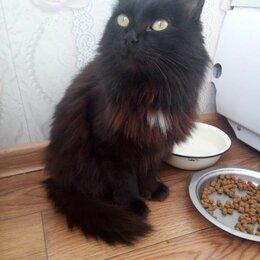 Кошки - Кошка молодая стерилизованная, 0