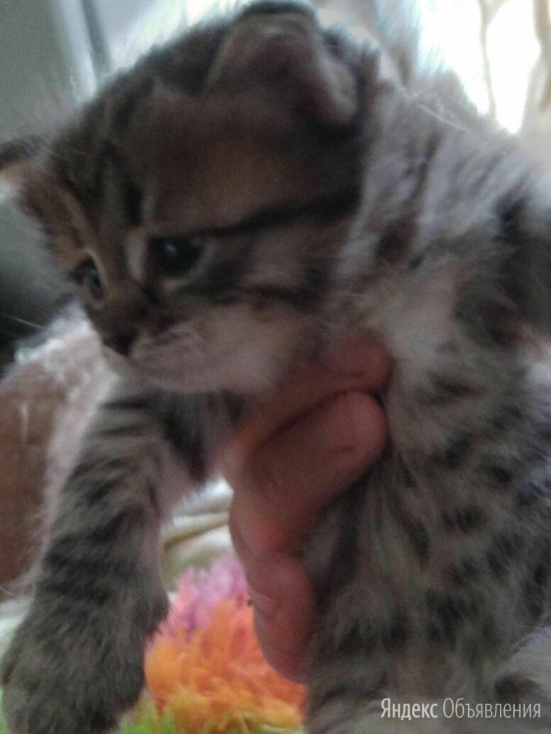 Отдам даром КОТЯТ по цене даром - Кошки, фото 0