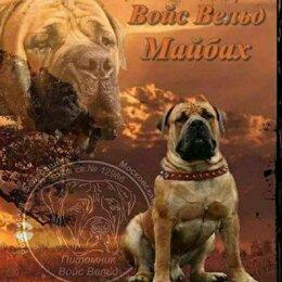 Собаки - Щенок, южноафриканский бурбуль, 0
