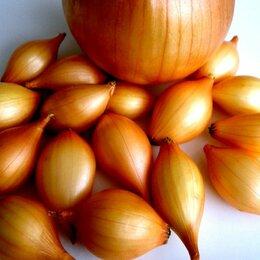 Продукты -  Продаю лук севок озимый, 0