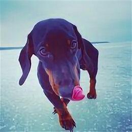Собаки - Такса собака черная, 0