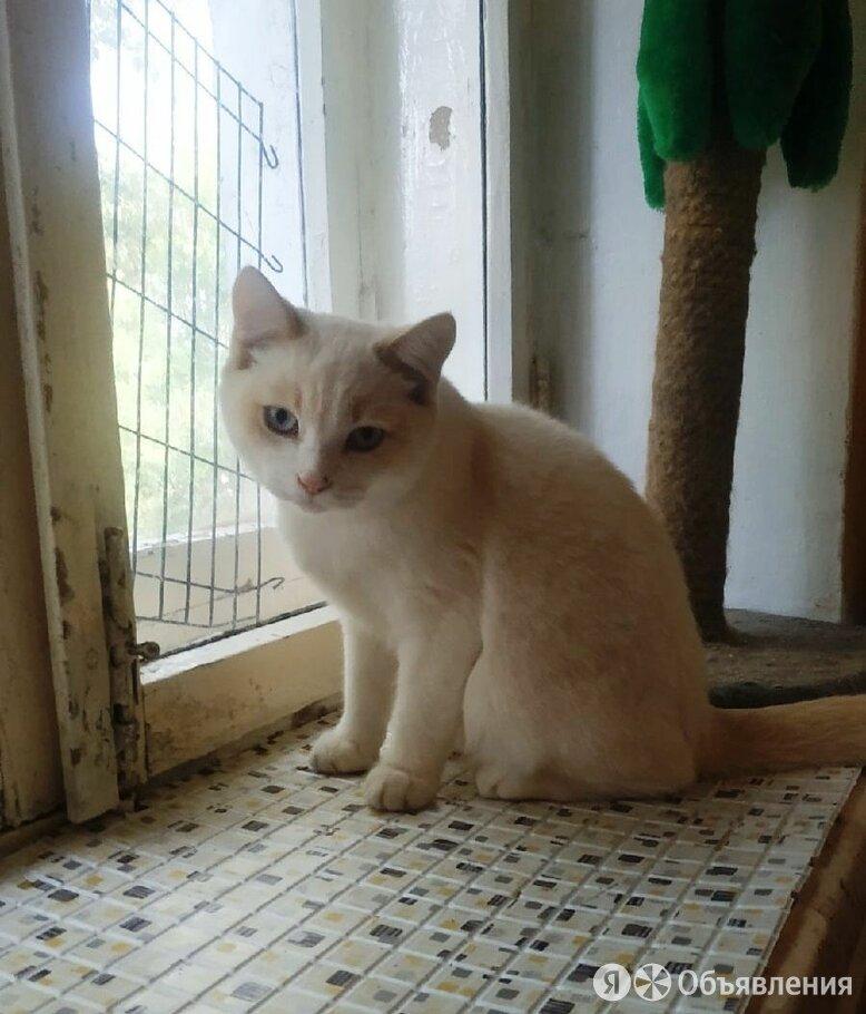 Котенок Фишка, 6 месяца по цене даром - Кошки, фото 0