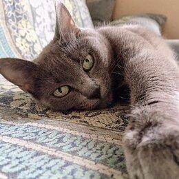 Услуги для животных - Возьму на передержку кота кошку , 0