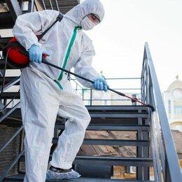Бытовые услуги - Профессиональное уничтожение насекомых АНТИ-ЖУК, 0