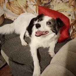 Собаки - Собака молодая стерилизованная, 0