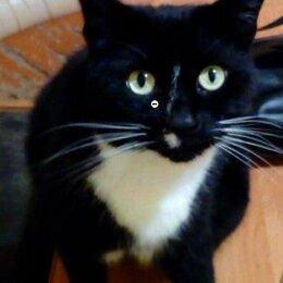Животные - Черный кот с белой грудкой, 0
