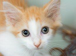 Кошки - Спасенный возле шоссе котенок Крошик, 0