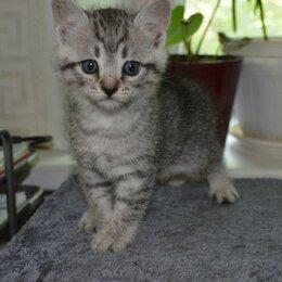 Кошки - котята 2 месячные ,3 штук в дар.едят все.2 сиамца -по 500 рубл,торг., 0
