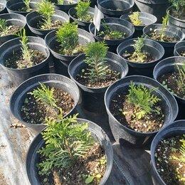 Бытовые услуги - Работник на посадку растений, 0