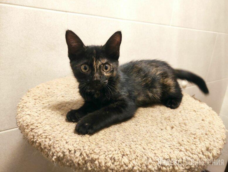Котенок-девочка ищет дом по цене даром - Кошки, фото 0