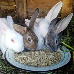 Кролики - Молодые крольчата, 0