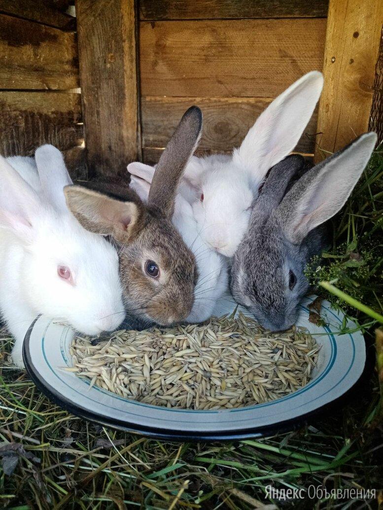 Молодые крольчата по цене 300₽ - Кролики, фото 0