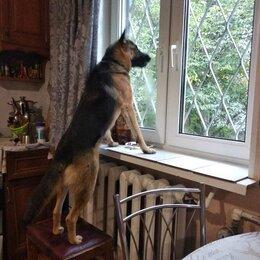 Собаки - Немецкая овчарка , 0