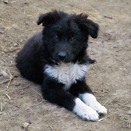 Собаки - Щенок мальчик , 0
