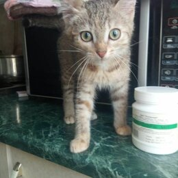 Кошки - Котенок 2 месяца, 0