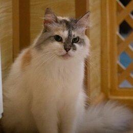 Кошки - Невероятно ласковая Пыша ждет свою семью, 0