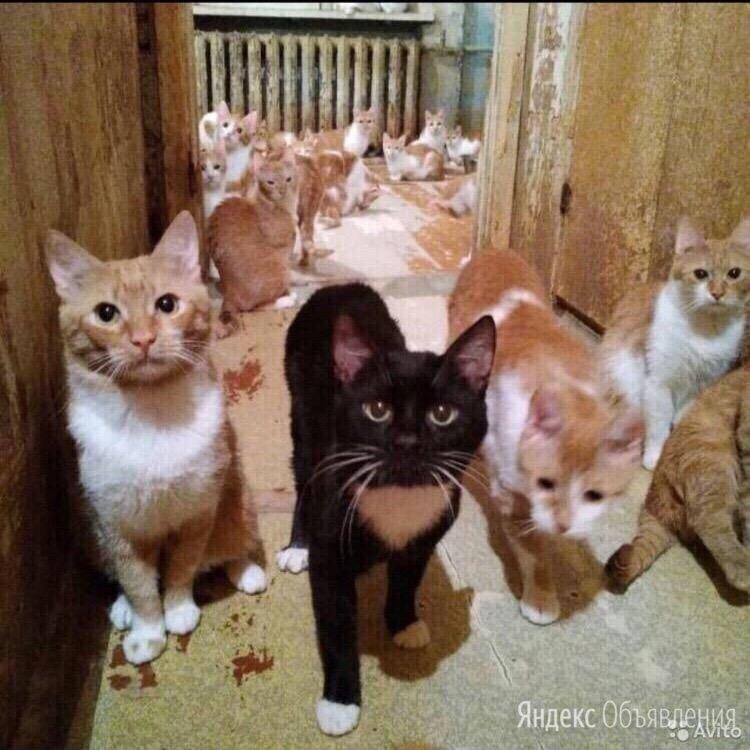 Помогите выжить  по цене даром - Кошки, фото 0