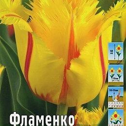 Луковичные растения - Тюльпан бахромчатый фламенко, 0