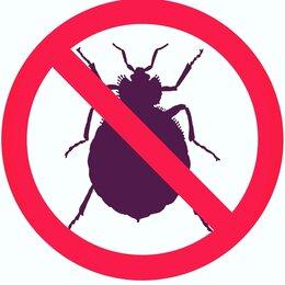 Прочие услуги - Уничтожение Тараканов, клопов, клещей и других насекомых . , 0