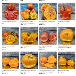 Семена - Семена редких коллекционных и экзотических томатов, 0