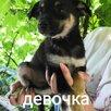 Беспородная собака по цене даром - Животные, фото 3