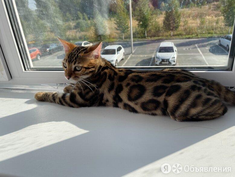 Бенгальский котёнок  по цене 35000₽ - Кошки, фото 0