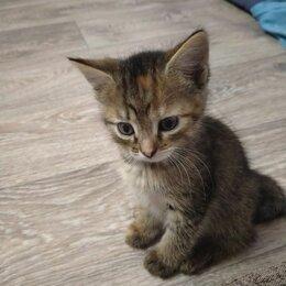 Кошки - Котёнок, 0