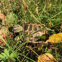 Животные - Среднеазиатская степная черепаха пропала, 0