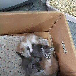 Кошки - Котята в добрые руки , 0