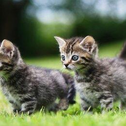 Кошки - Забавные котята, 0