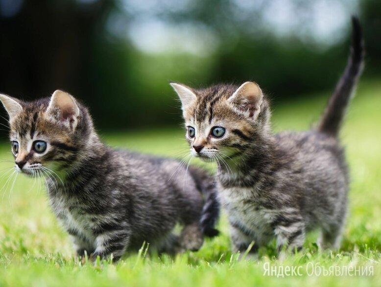 Забавные котята по цене даром - Кошки, фото 0