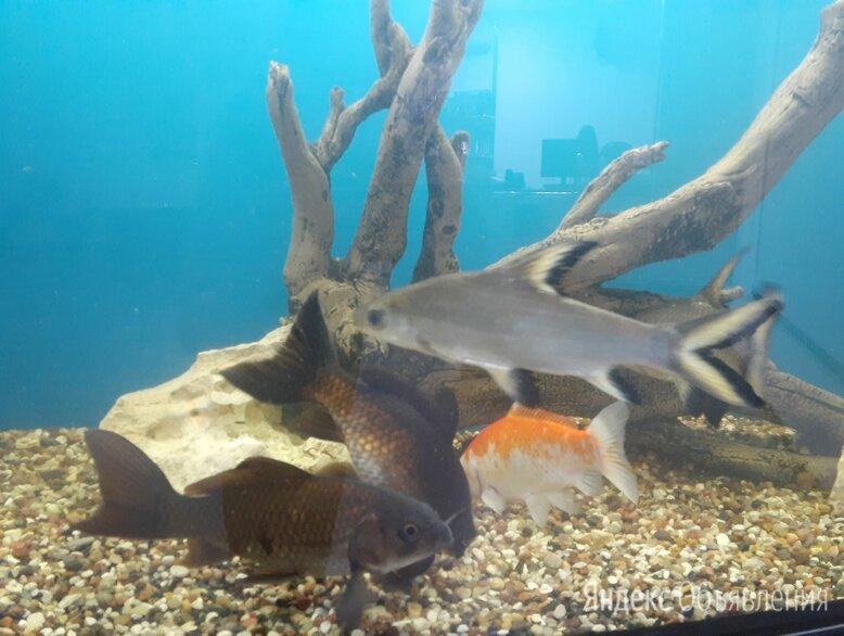 Продается аквариум, рыбки и все сопутствующие принадлежности  по цене 25000₽ - Аквариумы, террариумы, тумбы, фото 0