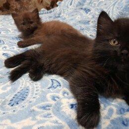 Кошки - Сибирская, 0