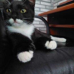 Кошки - Ручная ласковая девочка Манана 8 мес ищет дом или передержку, 0