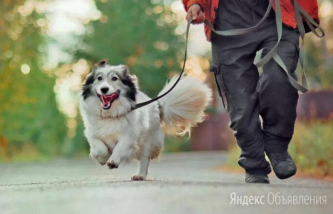 Маленькая и очень пушистая собачка по цене даром - Собаки, фото 0