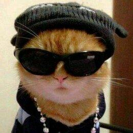 Кошки - Кот в бейсболке, 0